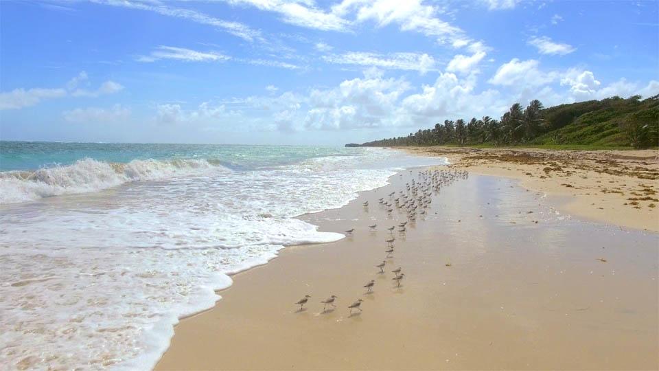 plage-martinique-oiseau