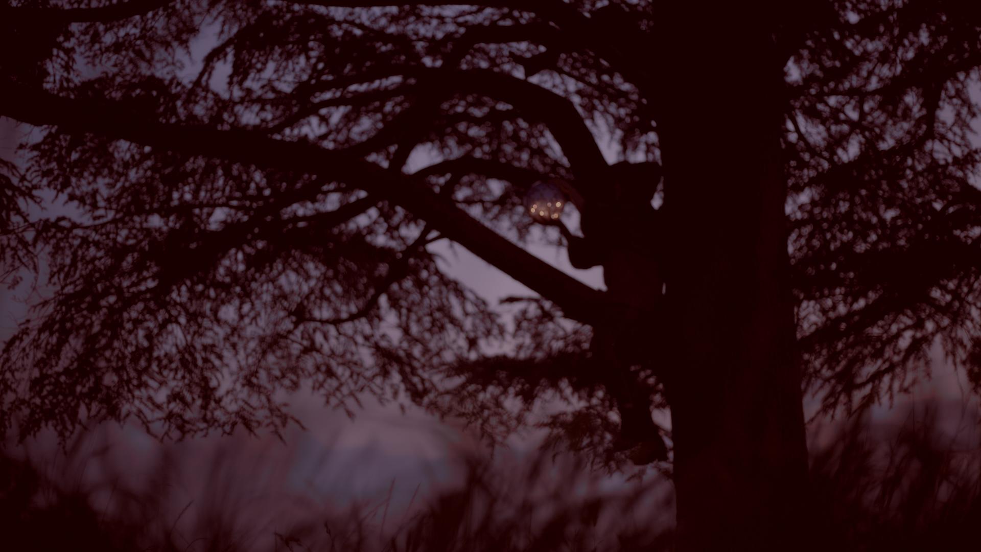 clip-video-arbre-bordeaux-cenon-esmo-clip-leo-meslet-xaleo