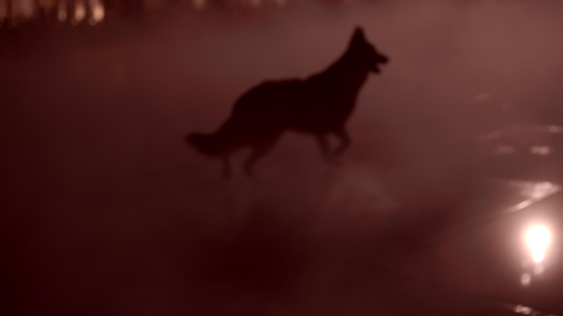clip-video-chien-bordeaux-miroir-deau-esmo-leo-meslet-xaleo