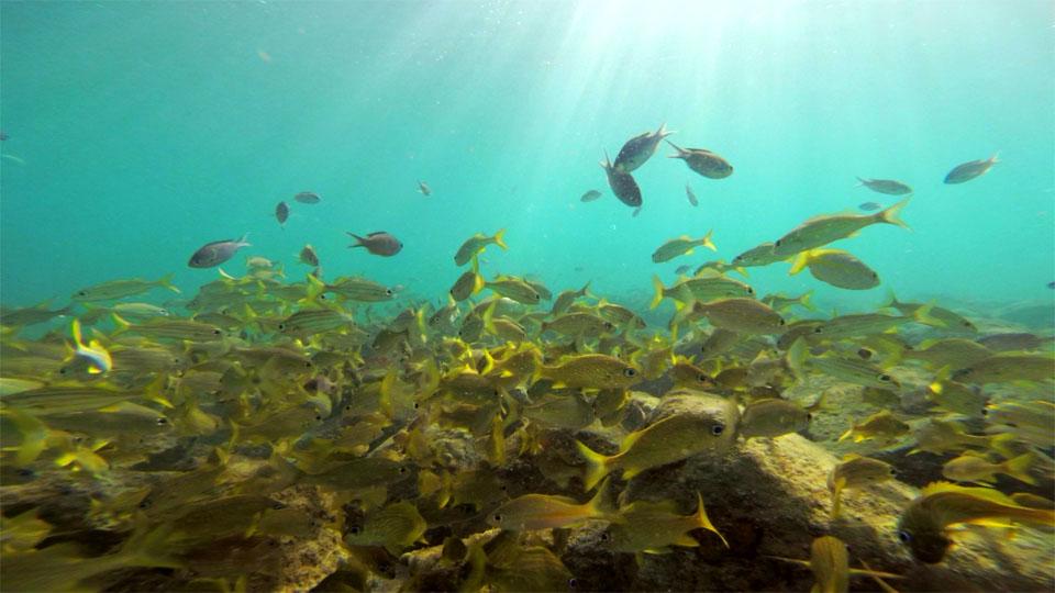 poissons-martinique-plage-video-leo-meslet-xaleo